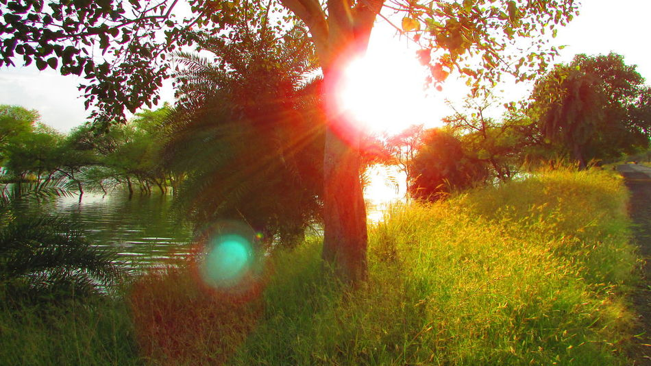 A ray of sunshine. Day Forest Grass Idyll Lens Flare Nature Outdoors Scenic Drive Sky Sun Sunbeam Sunlight Tranquility Tree Wetland