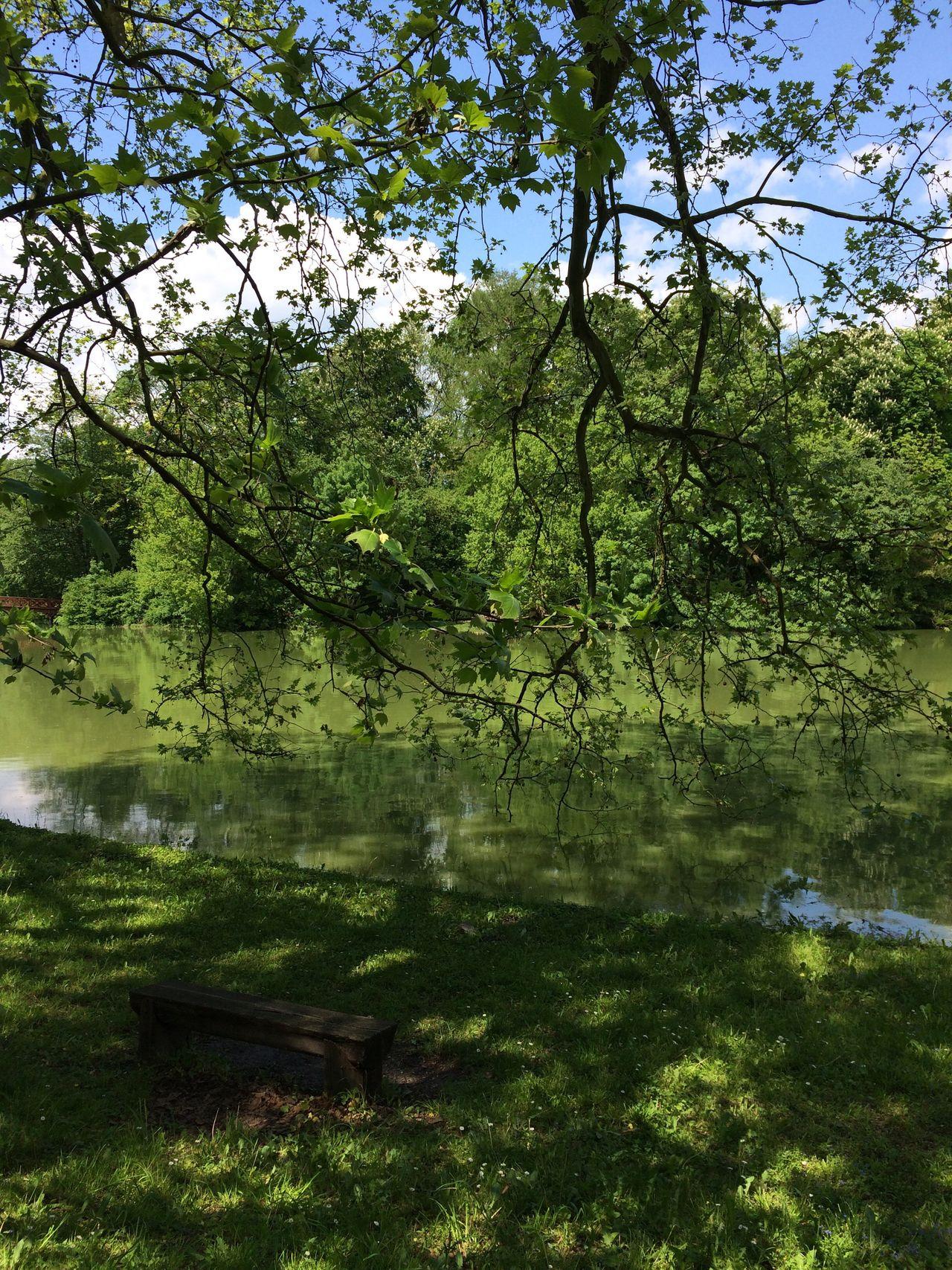 Lake Bench Tree Trees