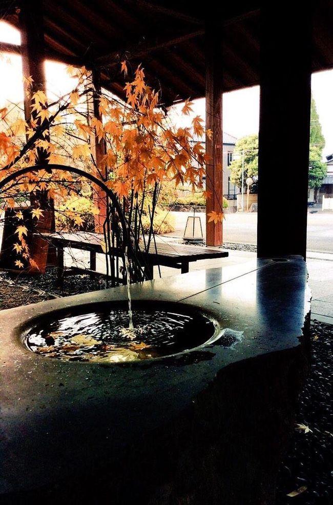 autumn leaves Autumn Autumn Leaves Wabi-sabi Water Japan No People Not Edited