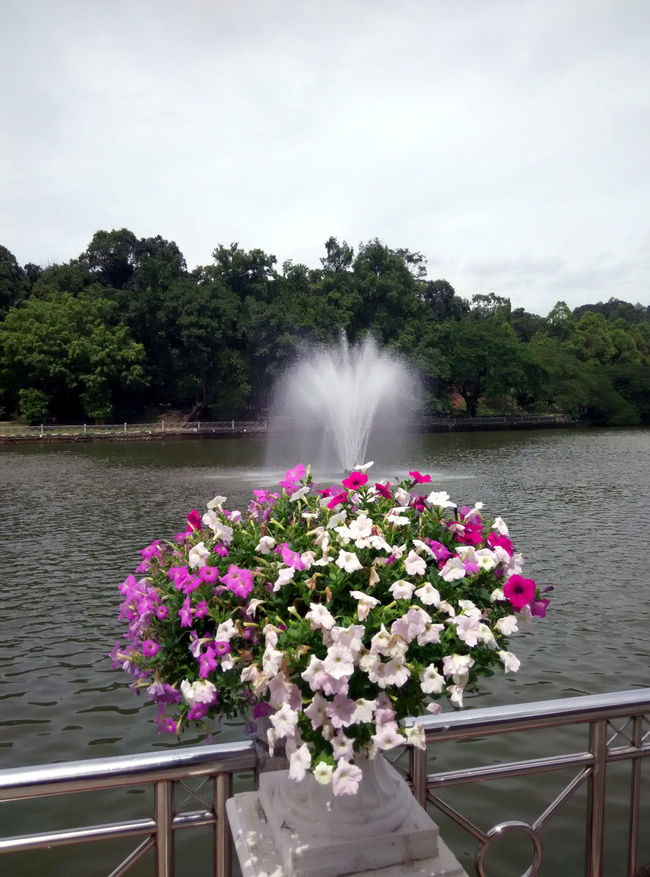 Flowers on the shore Flower Freshness Garden Jumping Water Lake Nature Pink Color Water