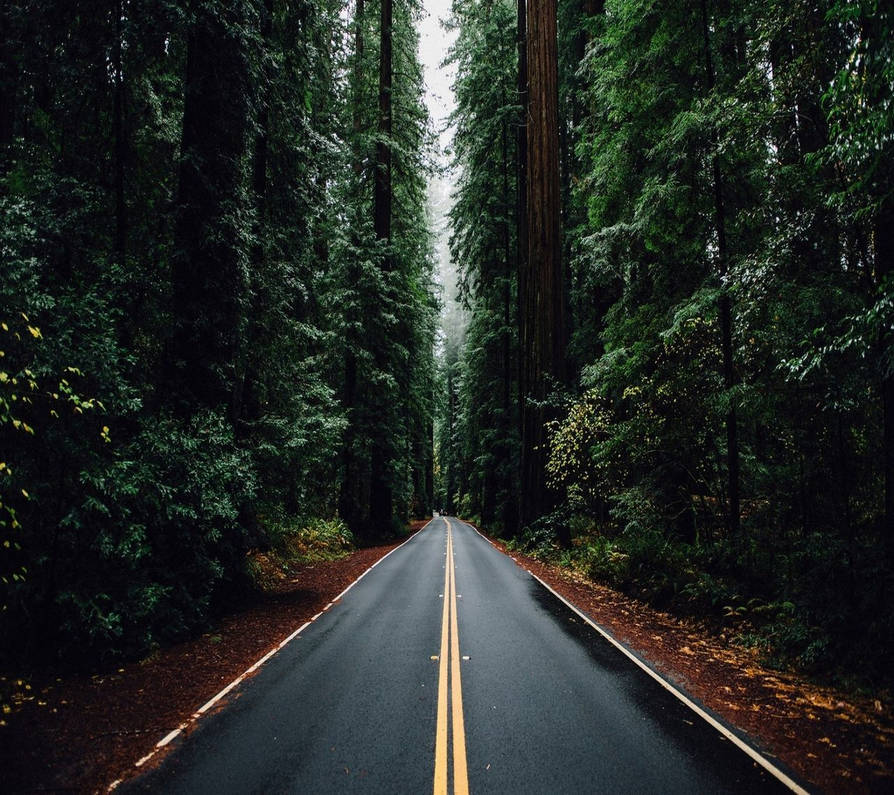 Trees Along Empty Road In Forest