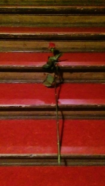 Rote Rose🌹 Italiener Lang Stairs Friends to Love Lovely Present Flowers