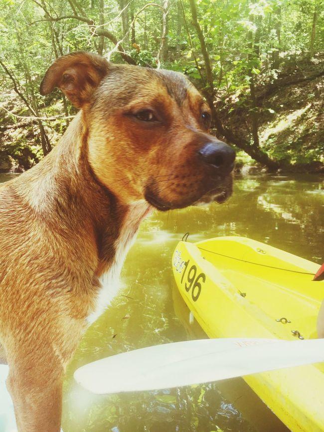 Dog Fishing River Kyacking Pets Domestic Animals Close-up Loyalty First Eyeem Photo