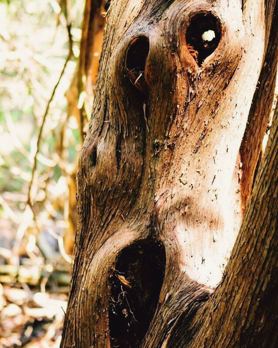 Ent Tree Life In Trees Eyes Watching You Forest Life Edvard Munch EdvardMunch The Scream Forest Tree Art Tree Of Life Tree Hugger Tree Lover Tree Love Watcher Watching You The OO Mission