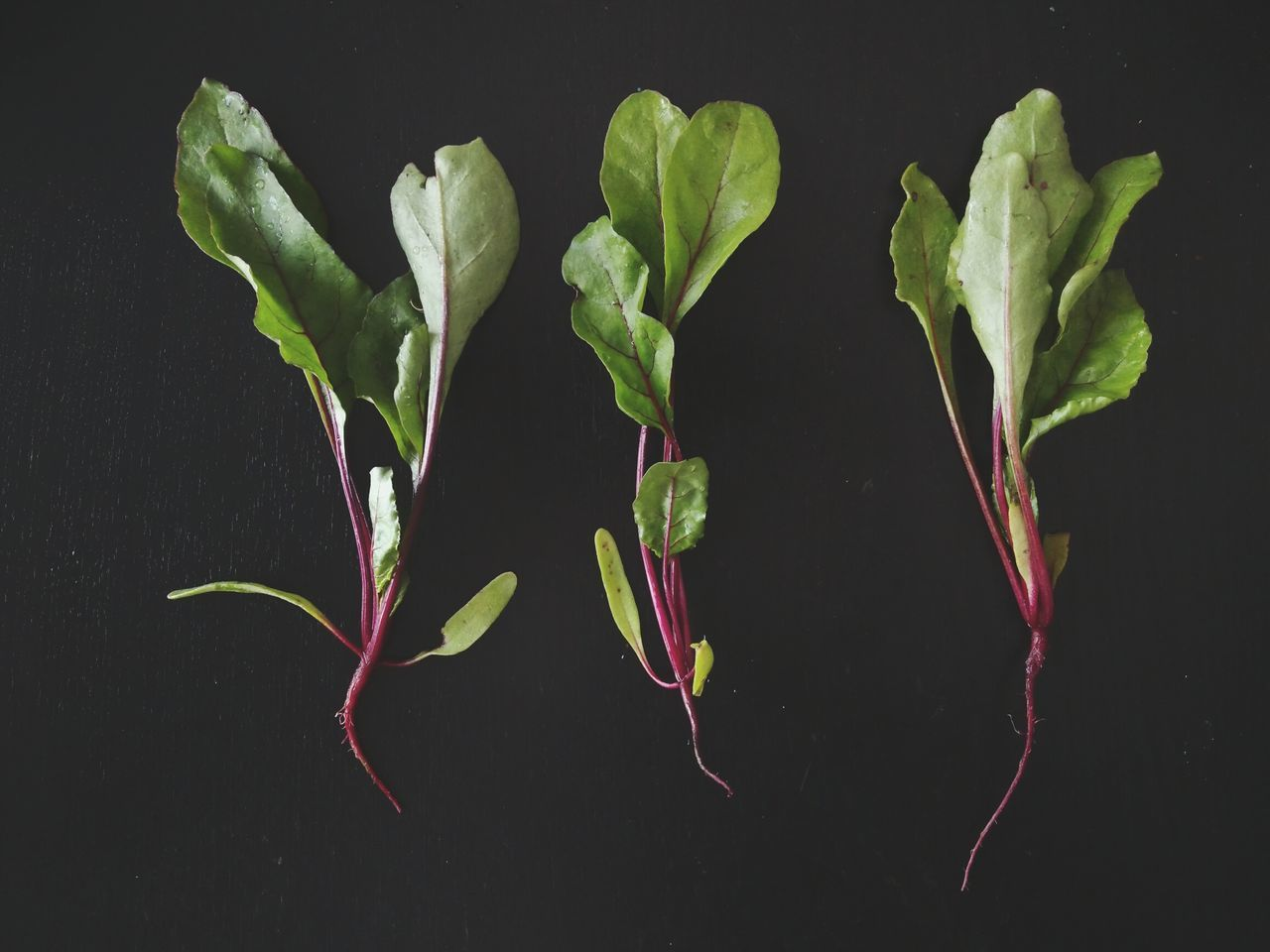Black Background Studio Shot Food And Drink Healthy Eating Vegetable No People Close-up Plant Indoors  Freshness Food Vegetarian Food Raw Food Playing With Food Kitchen Art Backgrounds Salad Plants 🌱 Roots
