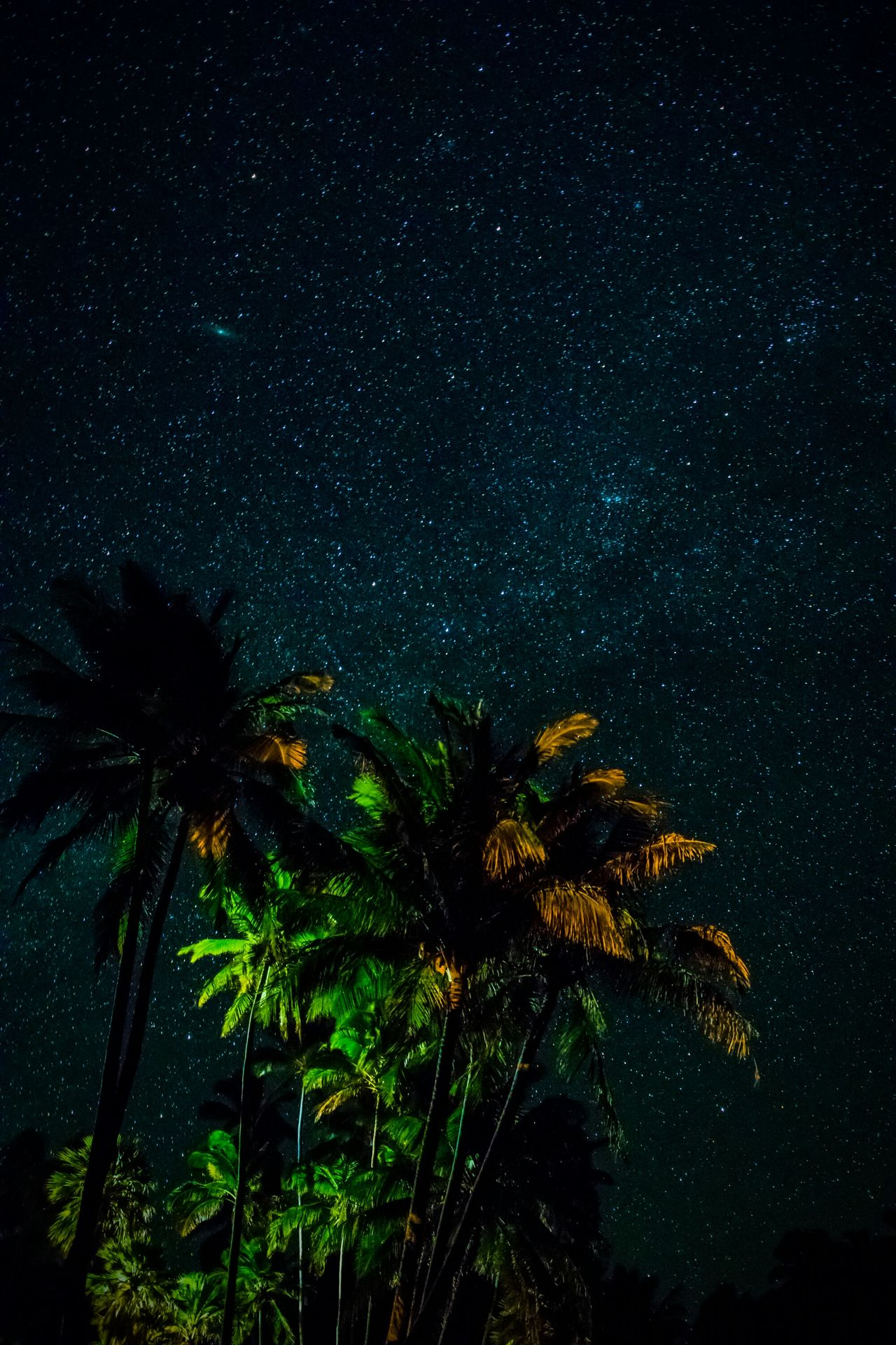 Watching the stars on a lonely beach Astrophotography Nature Beauty In Nature Star - Space Sky Scenics Galaxy Milky Way Space Hawaii Hawaiishots Big Island Love Big Island Hawaii From My Point Of View Landscape_Collection Landscape Photography Big Island Landscape_photography Landscape Tropical Climate Palm Tree