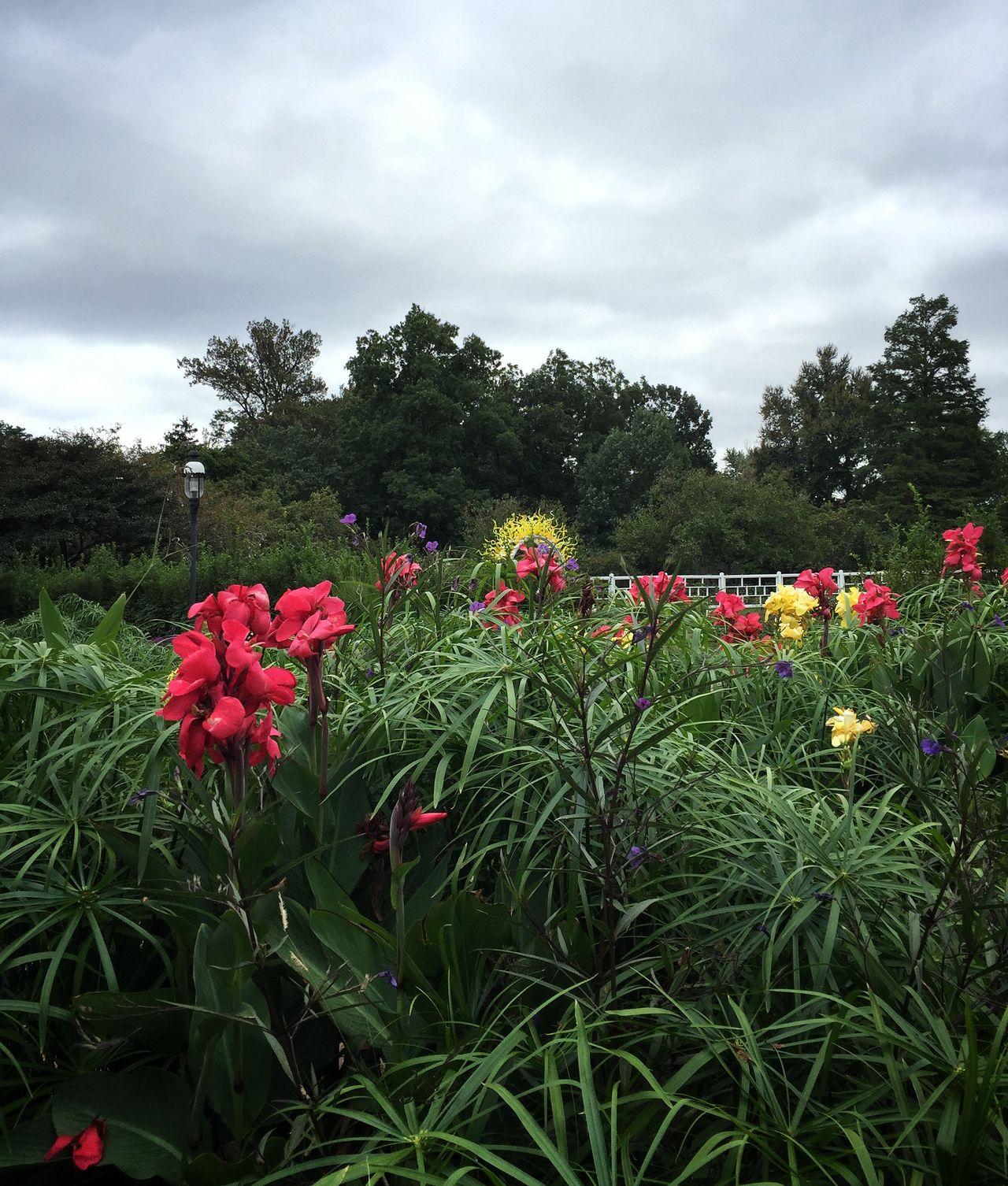 Taking Photos Missouri Botanical Garden Cloudy