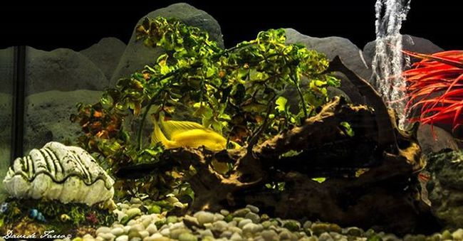 My aquarium Fish Aquarium Aquarist Aquariumfish Fishtank Goldenfish Fishporn Instafish Instagood Swim Swimming Water Coral Reef Marineaquarist Fishhobby Instafish Petsofinstagram Reeftank Tropical TropicalFish Aquaria Photooftheday Saltwater Freshwater beautiful ocean watertank