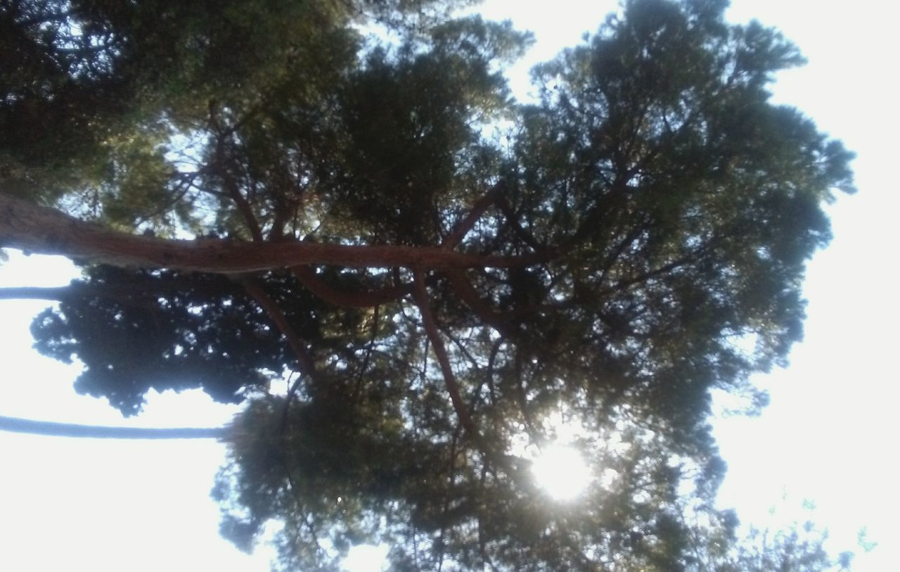 tree, low angle view, nature, day, growth, no people, tranquility, outdoors, beauty in nature, sky