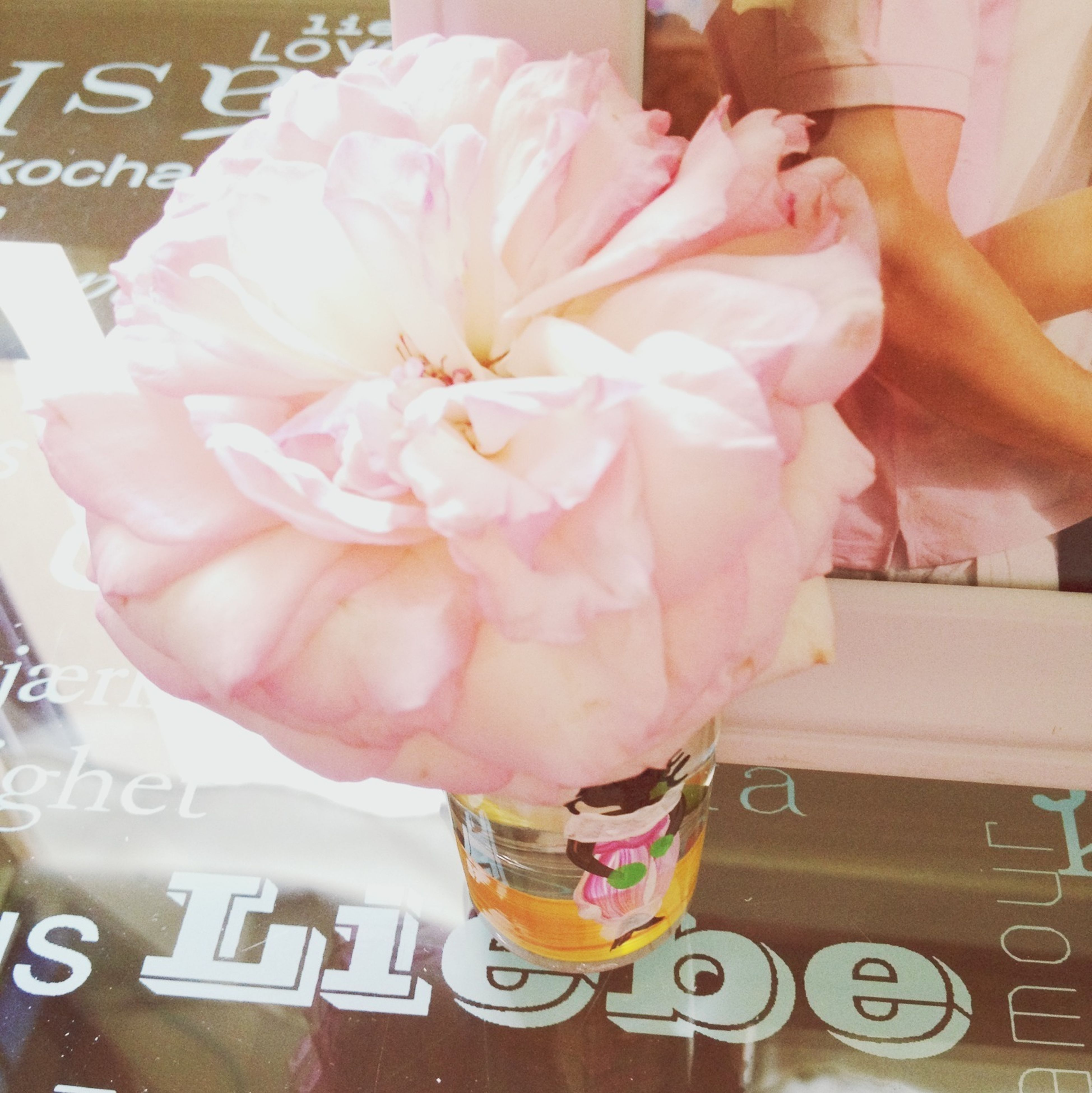 indoors, text, western script, communication, person, flower, paper, close-up, pink color, part of, high angle view, holding, freshness, cropped, non-western script, book