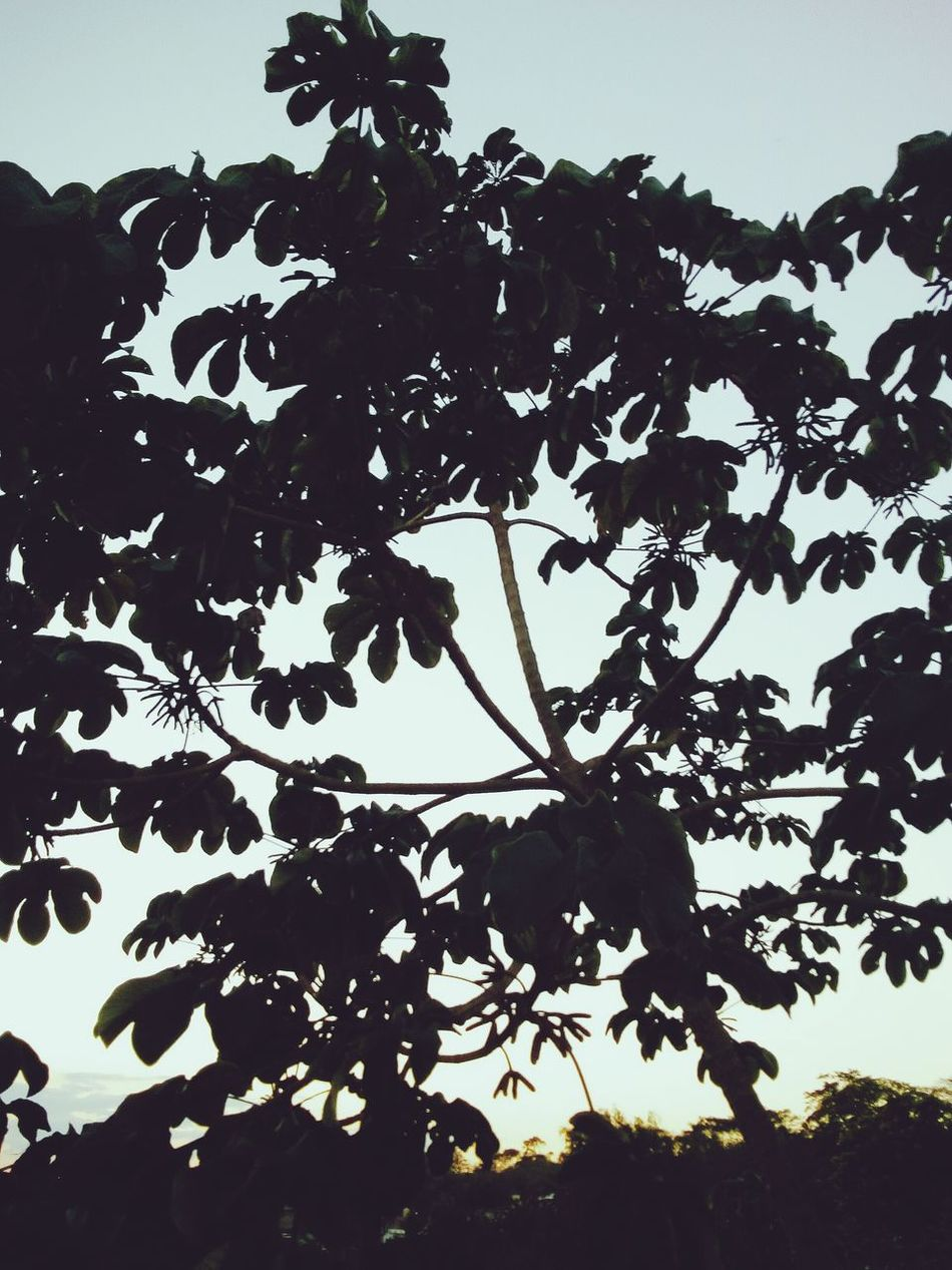 Naturaleza Black Color Tree Silhouette Nature Leaf No People Outdoors Day Beauty In Nature Close-up Sky Ink Leopard Mammal First Eyeem Photo