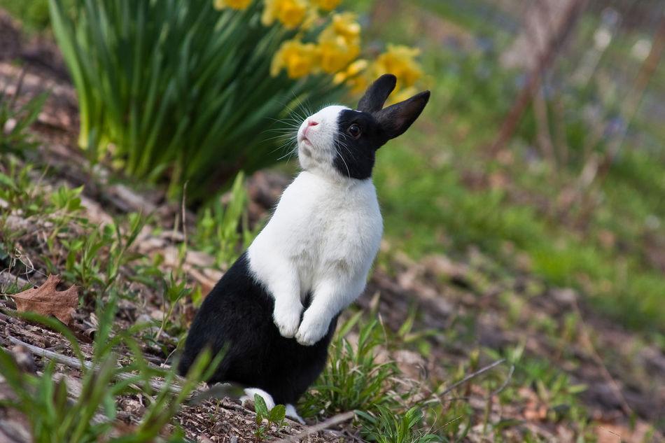 Beautiful stock photos of osterhasen, Animal Themes, Animal Wildlife, Animals In The Wild, Black Color