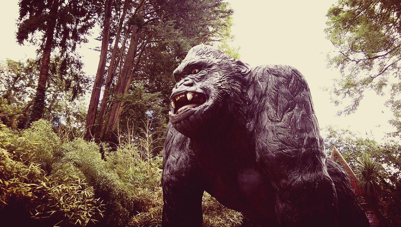 King Kong Family Day Out Bit Of Fun Enjoyment