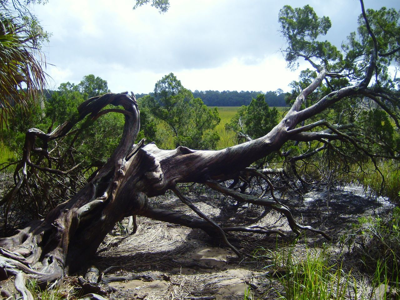 tree, nature, forest, no people, sky, outdoors, beauty in nature, day, branch, scenics, landscape, animal themes, dead tree, mammal