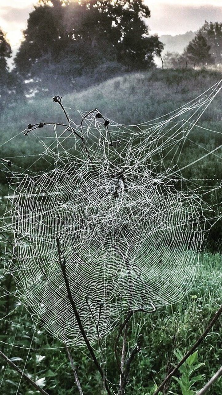 spider web, nature, day, no people, outdoors, web, focus on foreground, beauty in nature, spider, close-up, growth, tree, complexity, trapped, fragility, animal themes, sky