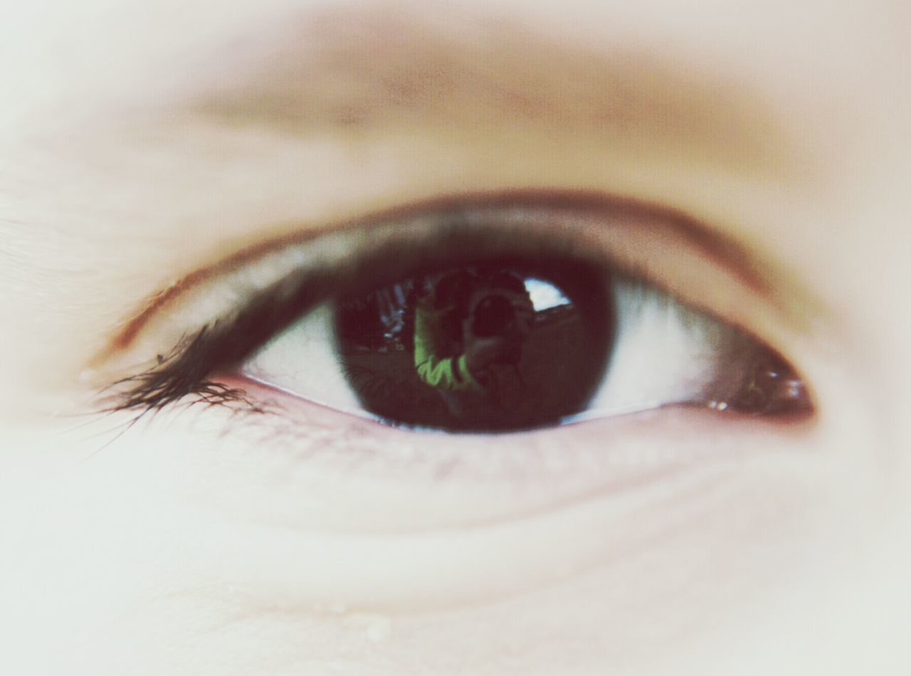 Close-Up Of Reflection In Human Eye