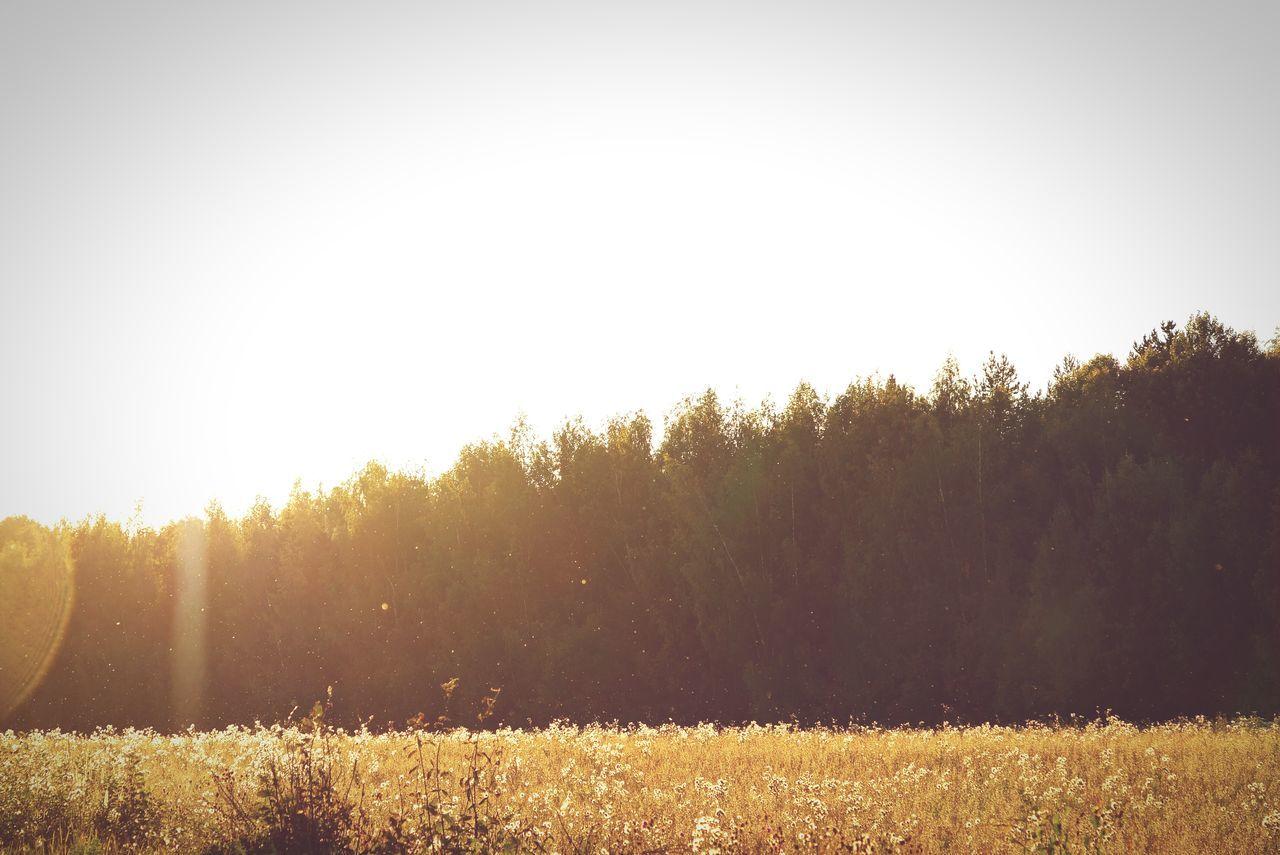 Morning Summer Russia Forest Field Landscape Summertime Hello World Gold Golden Hour Grass