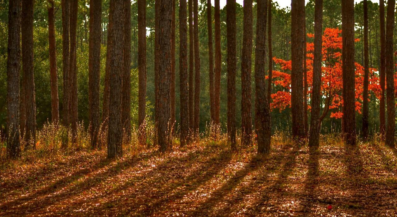 Good night everyone! TreePorn Nature_collection Eye4photography  EyeEm Best Shots
