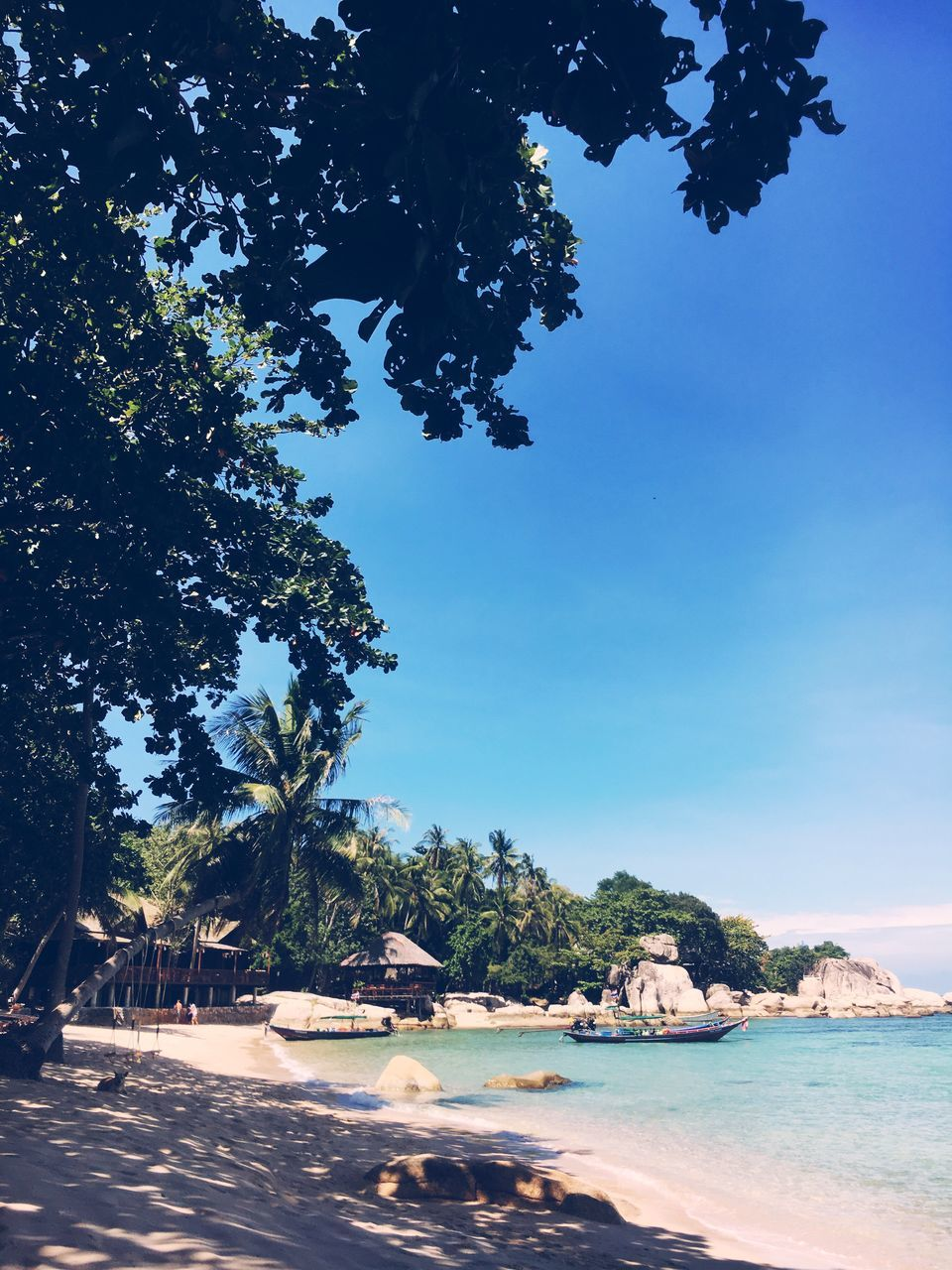 tree, sea, tranquil scene, sunlight, water, tranquility, beach, outdoors, scenics, blue, sky, nature, day, beauty in nature, no people, built structure, swimming pool, architecture, palm tree, clear sky