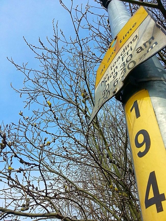 Signs Spring Is Coming  The World Needs More Yellow SignSignEverywhereASign