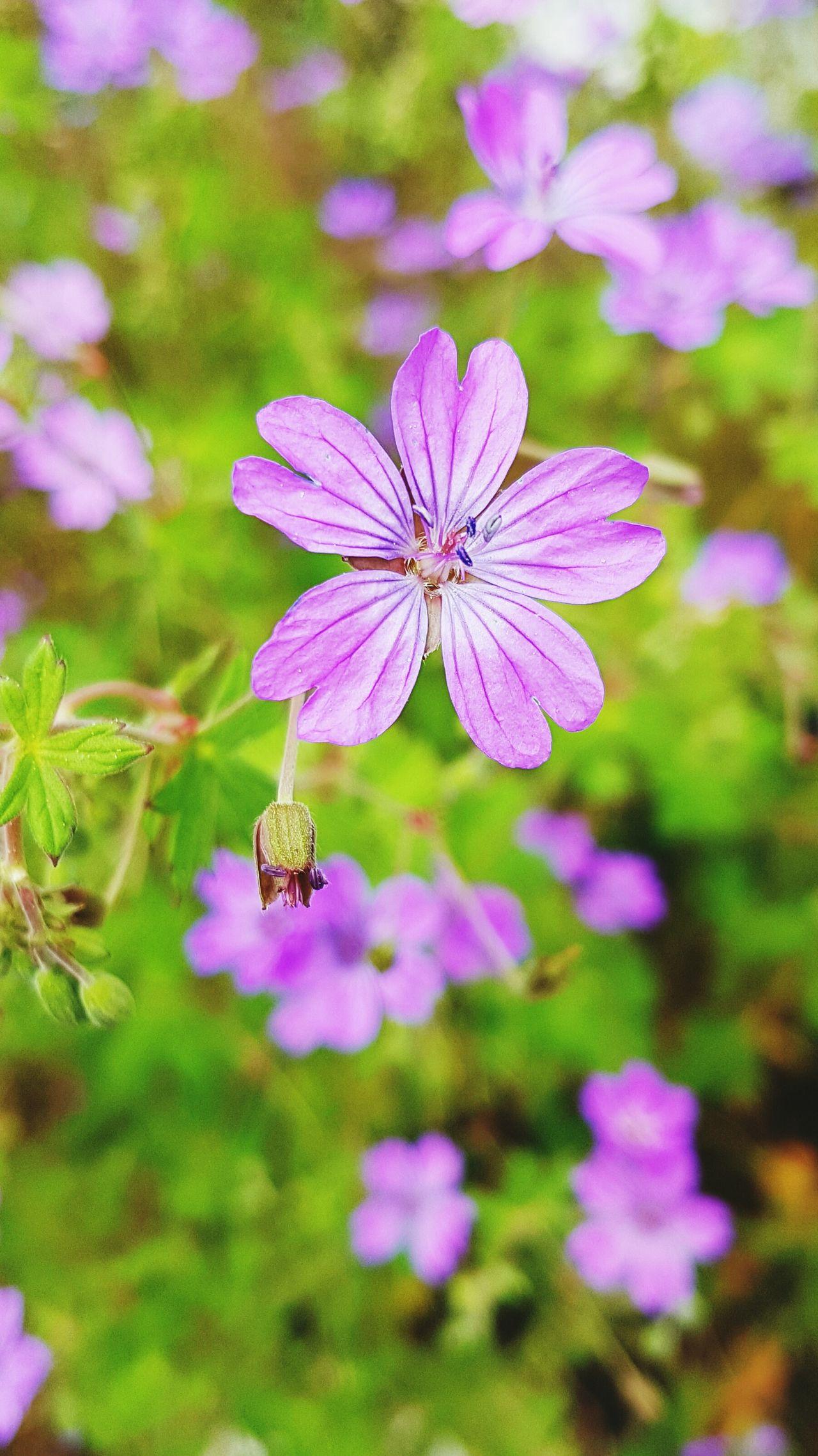 LoveNatureAndMountain Eyem Nature Lovers  Flower Photography Switzerland Verbier Medicinal Plants