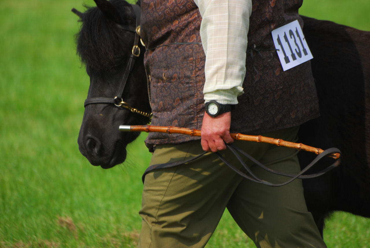 Equestrian Equestrianlife Equestrianphotography Horse Photography  Horse Riding Horse Show Pony Tail