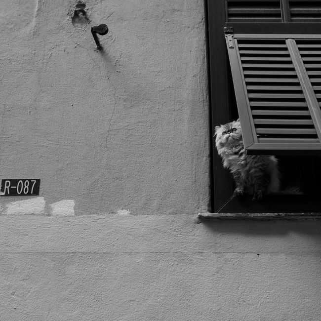 Blackandwhite Building Exterior Cat City City Life Day Feline Pose Puppy Wall