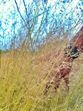 Hanging Out Hello World Taking Photos PhonePhotography First Eyeem Photo Enjoying Life