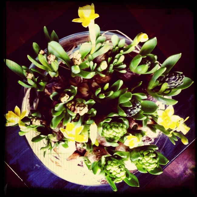 Lente in huis. Nature The World Around Me Spring Happy