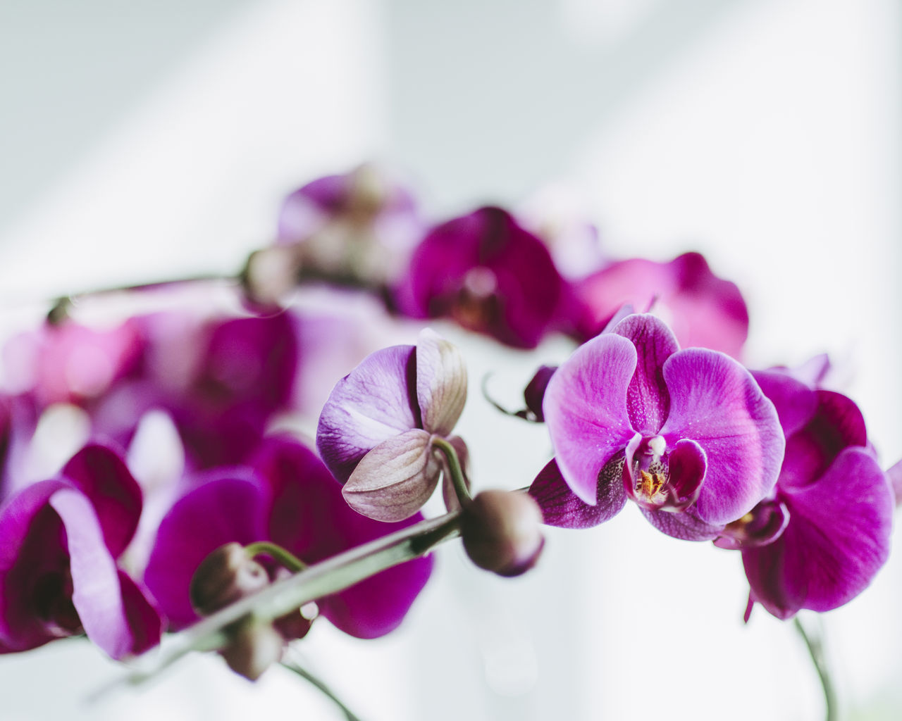 Beautiful stock photos of spring,  Beauty In Nature,  Close-Up,  Day,  Flower