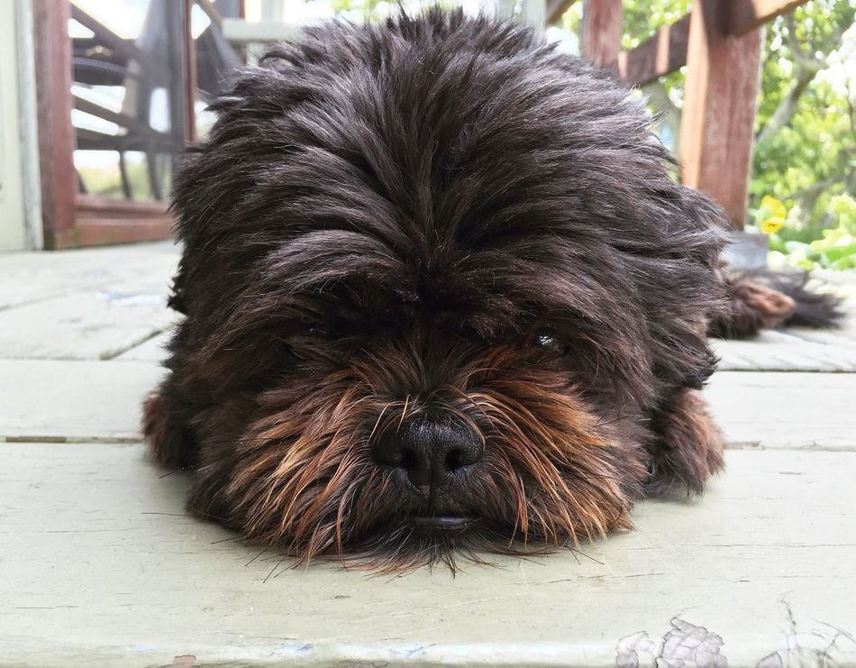 One Animal Pets Dog Domestic Animals Close-up Outdoors