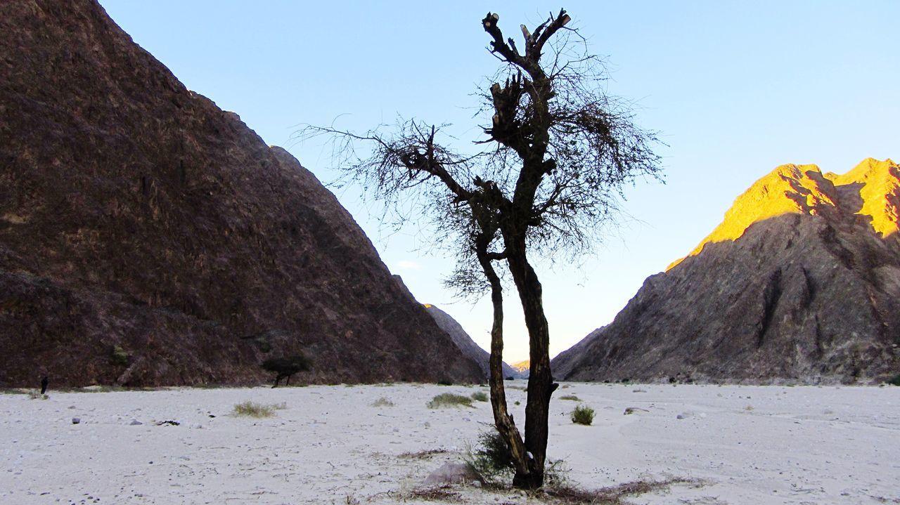 Desert Sinai Tree Acacia Mountains Sand Simplicity Landscape Spirituality