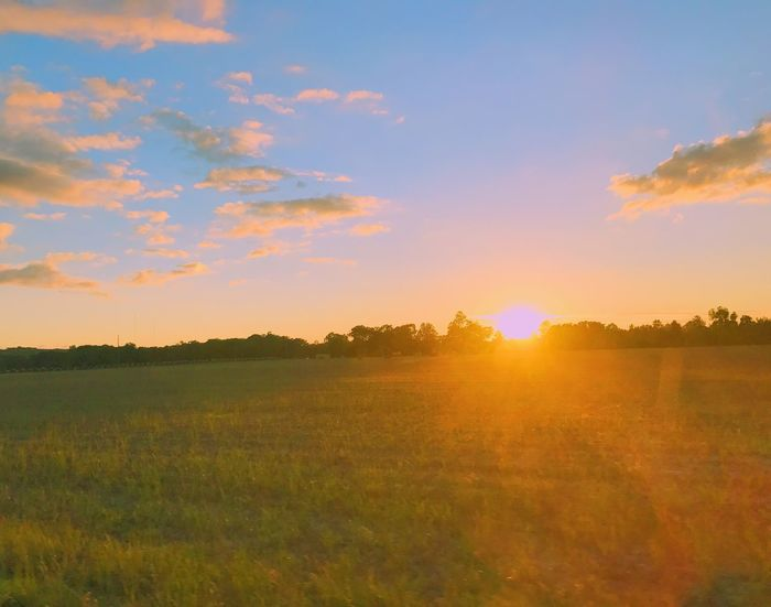 🌞 Sunset Field Nature Landscape Beauty In Nature Tranquil Scene Scenics Tranquility Grass Sun Sky Sunlight No People Outdoors Agriculture Growth Tree