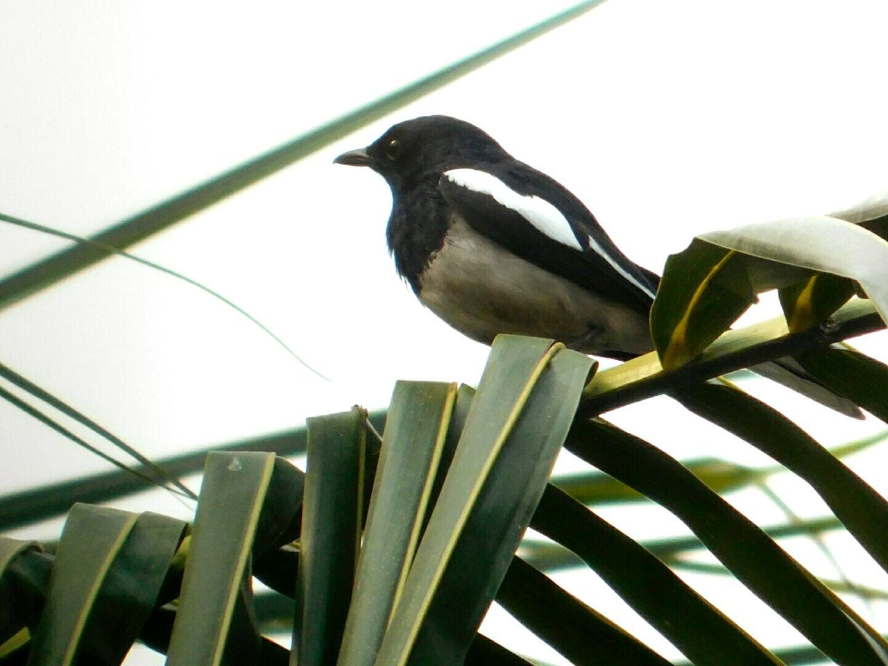 animal themes, animals in the wild, bird, one animal, perching, no people, animal wildlife, close-up, clear sky, day, outdoors, nature