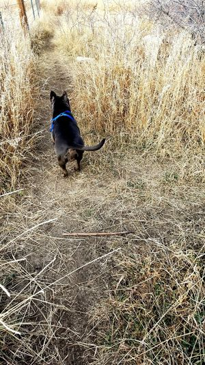 Enjoy The New Normal Off Leash Dog Park Dogs Bully Pit Long Walks