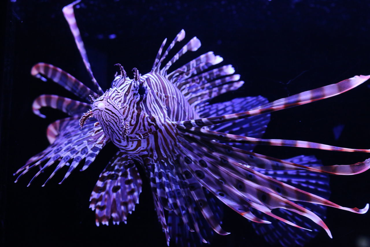Animal Themes Aquarium Aquarium Life Arts Culture And Entertainment Beauty In Nature Blue Blurred Motion Close-up In Water Insect Japan Long Exposure Motion Natural Pattern Nature Night No People One Animal Purple Water