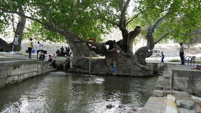 ZEYNEL ABİDİN Akarsu Dere ! :$ Doğa Karaman Mut Nature Outdoors Tree Turkey Water Reflections ZEYNEL ABİDİN
