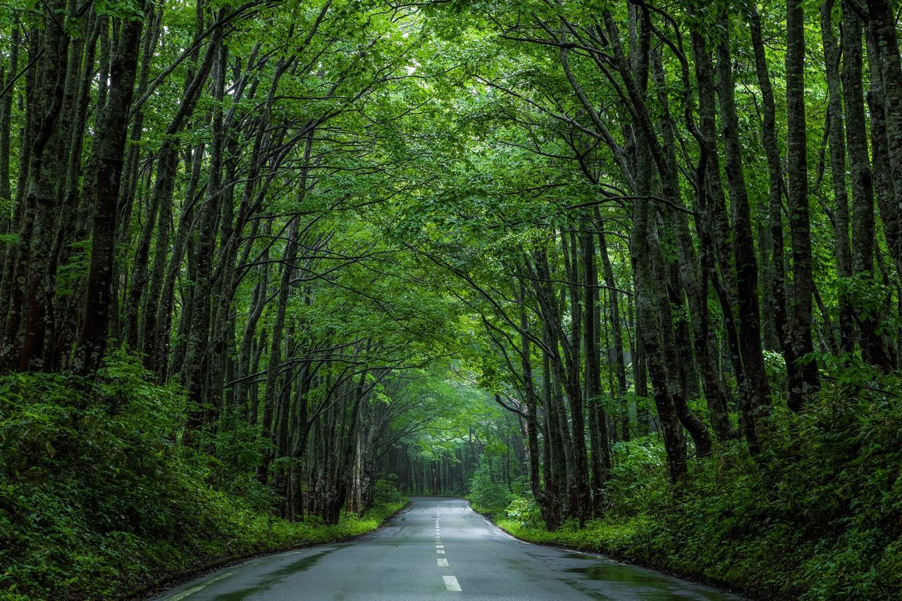 Nature Landscape Green Rain Market Bestsellers April 2016 Bestsellers Market Bestsellers 2017