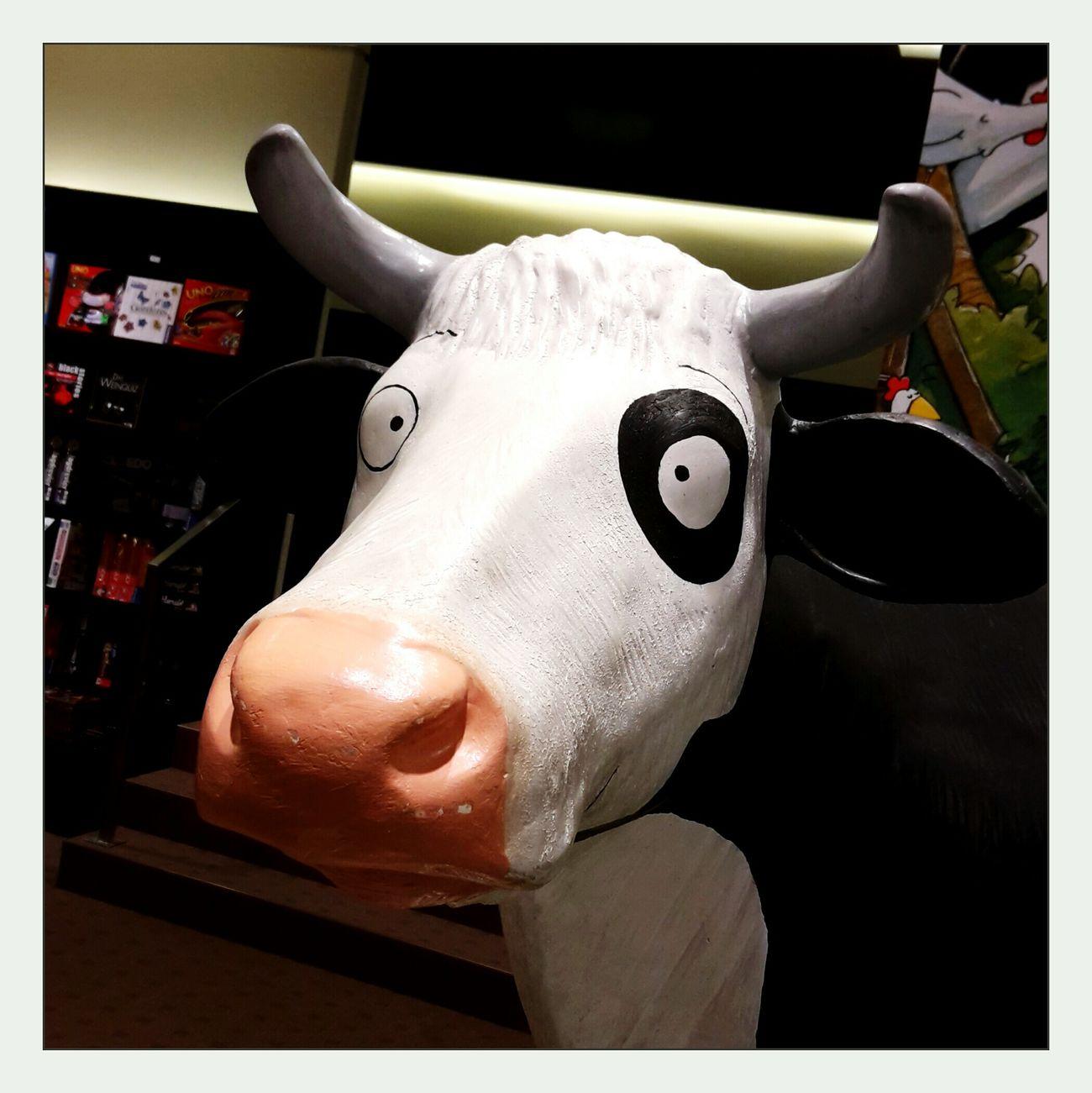good evening ladies and gentlemen, my name is lieselotte. ☺? Cow Lieselotte Shopphotography