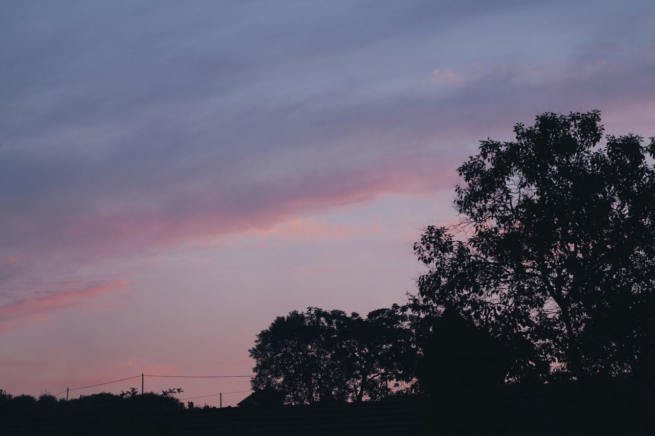 Tree Silhouette Beauty In Nature Nature Sky Sunset Scenics Tranquility Tranquil Scene Dusk No People Low Angle View Cloud - Sky Outdoors Day Sunset Glow Beauty In Nature From My Point Of View EyeEm Gallery EyeEmNewHere Outdoor The Great Outdoors - 2017 EyeEm Awards Pink Sky Pink Color Pink