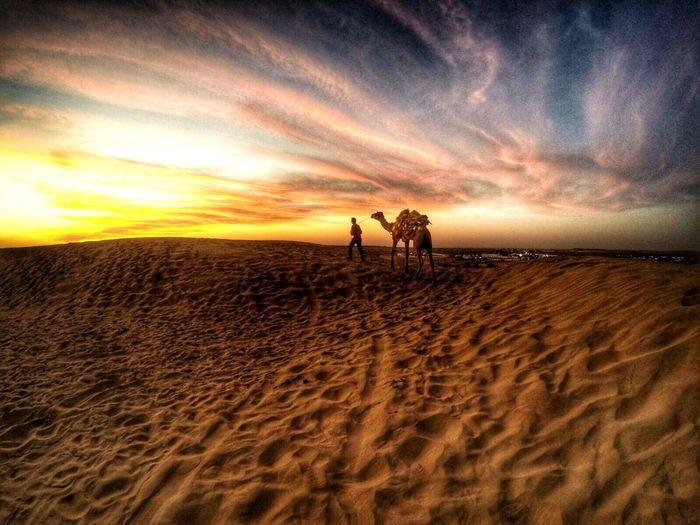 The Great Indian Dessert India Dessert Gujarat Sand Camels Sunset Colours