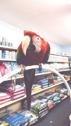 My Best Photo 2015 EyeEmBestPics EyeEm Gallery Taking Photos Pet Photography  Taking Photos Pet Petstore Bird Parrot Vscocam VSCO Vscogrid Vscogood Check This Out Smartphonephotography Mobilephotography 2015