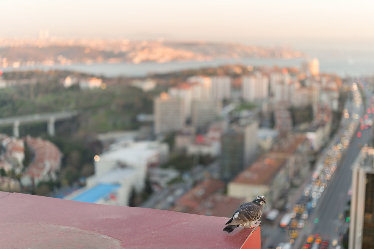 Not a pigeon for no mere pigeon may scale these heights. (uncropped version) Animal Themes Animals In The Wild Architecture Bird Bokeh Bokeh Balls Busy Street City City Life Cityscape Dusk Fine Art Focus On Foreground High Angle View Istanbul Istanbul City Nature No People One Animal Outdoors Pigeon Sky Sunset Sunset Silhouettes Sunset_collection The Architect - 2017 EyeEm Awards Live For The Story