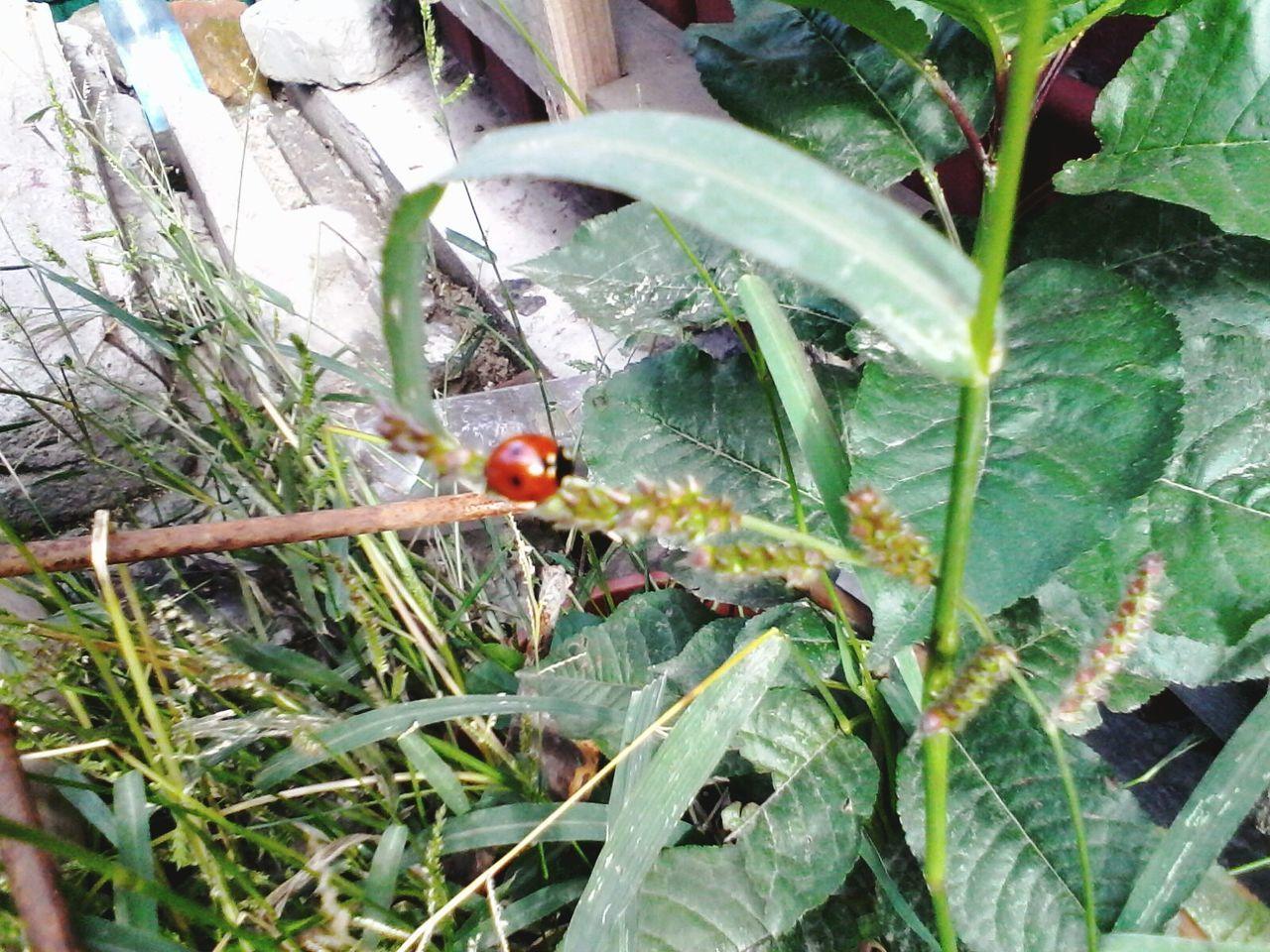 Wolfzuachis Green Plants Ladybeetle Ladybug Eyeem Market