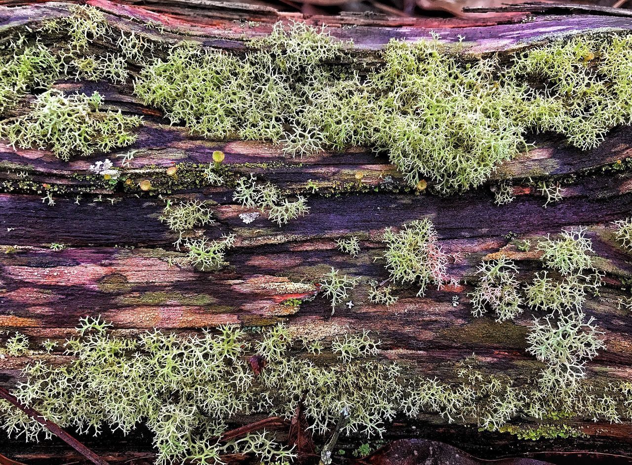 Whole world on a fallen log. Log Moss Growth Nature Beauty In Nature Green Color Outdoors Tree Leaf No People Scenics Day Close-up Plant Flower Freshness Water Ecology Lichen Reindeer Moss Powder Puff Lichen