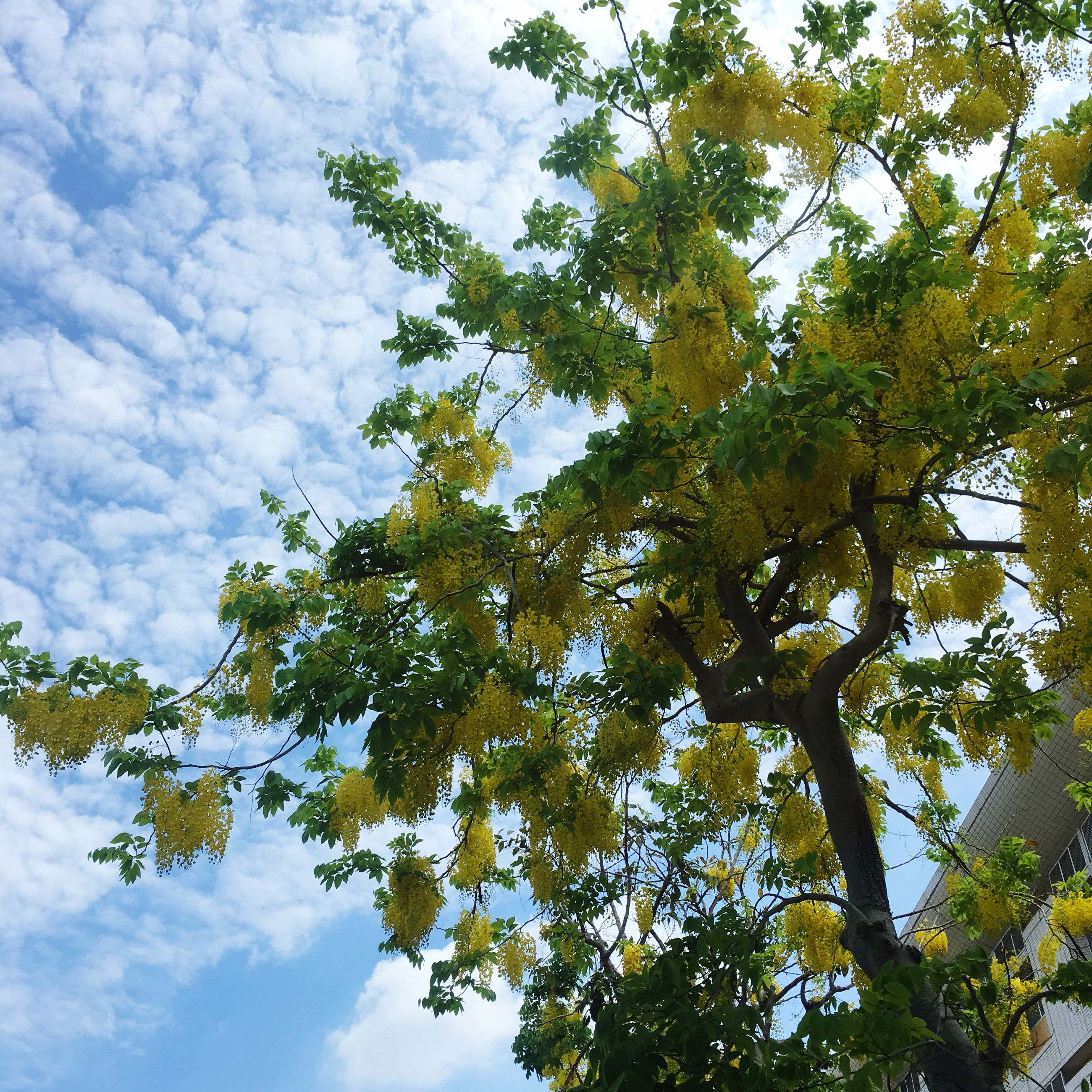 low angle view, tree, nature, sky, growth, beauty in nature, day, no people, tranquility, branch, outdoors, leaf, scenics