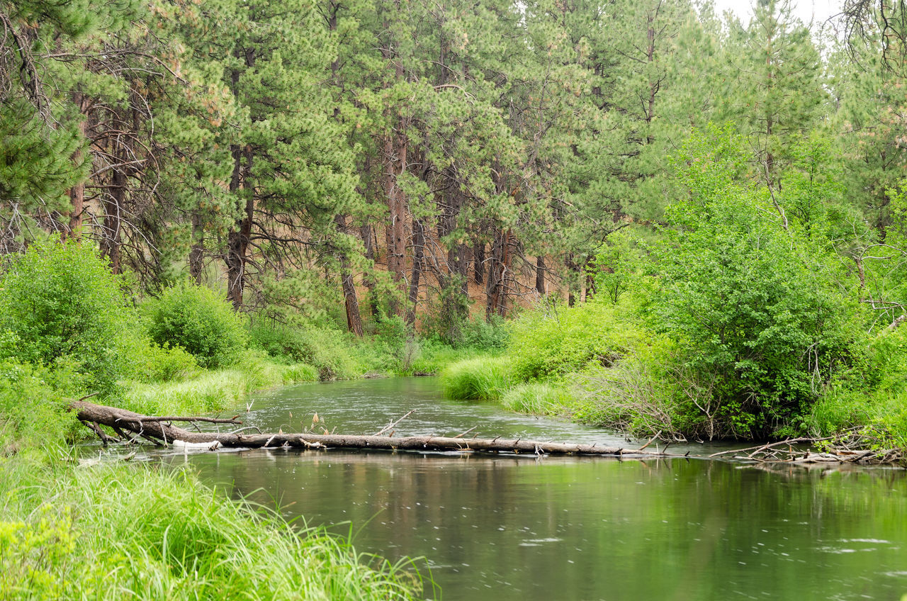 Deschutes River in central Oregon peacefully passing by Bend Calm Central Oregon Colorful Deschutes Forest Grass Landscape Meander Nature Oregon Outdoors Park Peaceful Relaxing River Stream Tourism Tranquility Travel Tree United States View Water Wood
