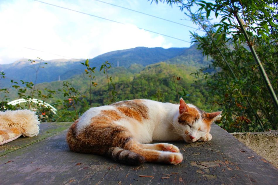 Taipei Taiwan Houtong One Animal Cat Beauty In Nature