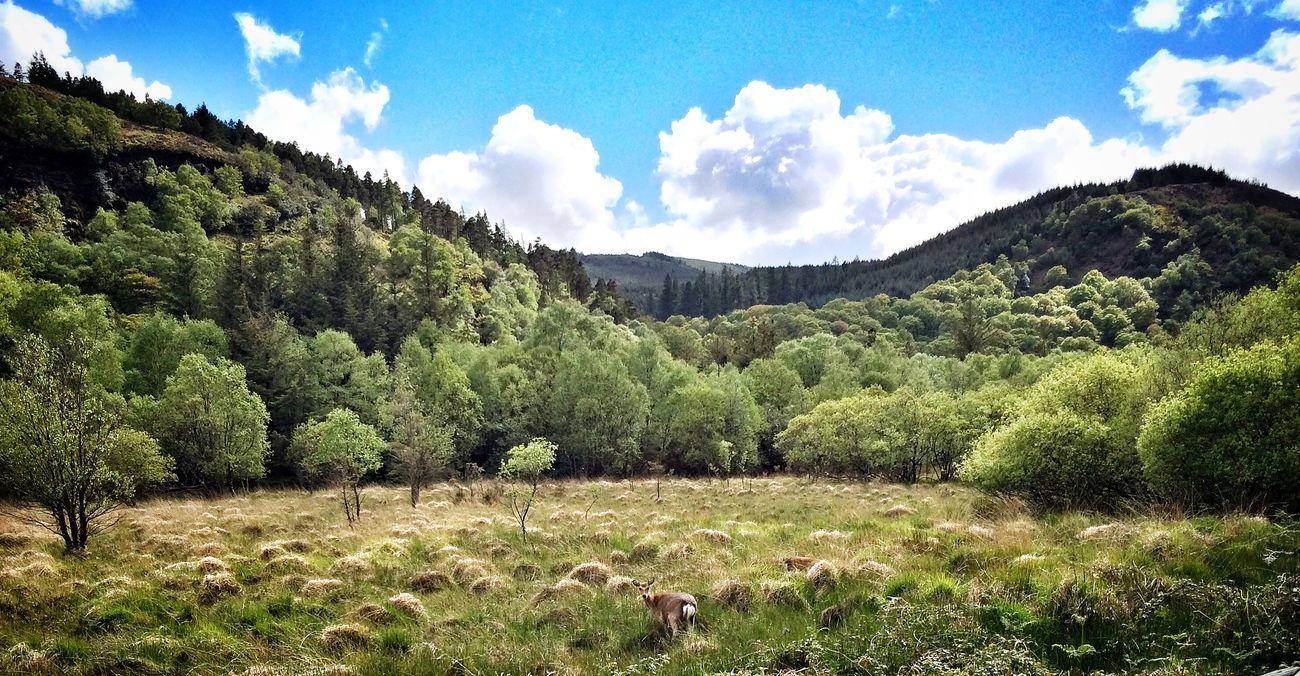 Deer looks back. The Places I've Been Today Irelandinspires EyeEm Animal Lover Nature On Your Doorstep Deer Glendalough IPhoneography IPhone Iphoneonly Iphonesia