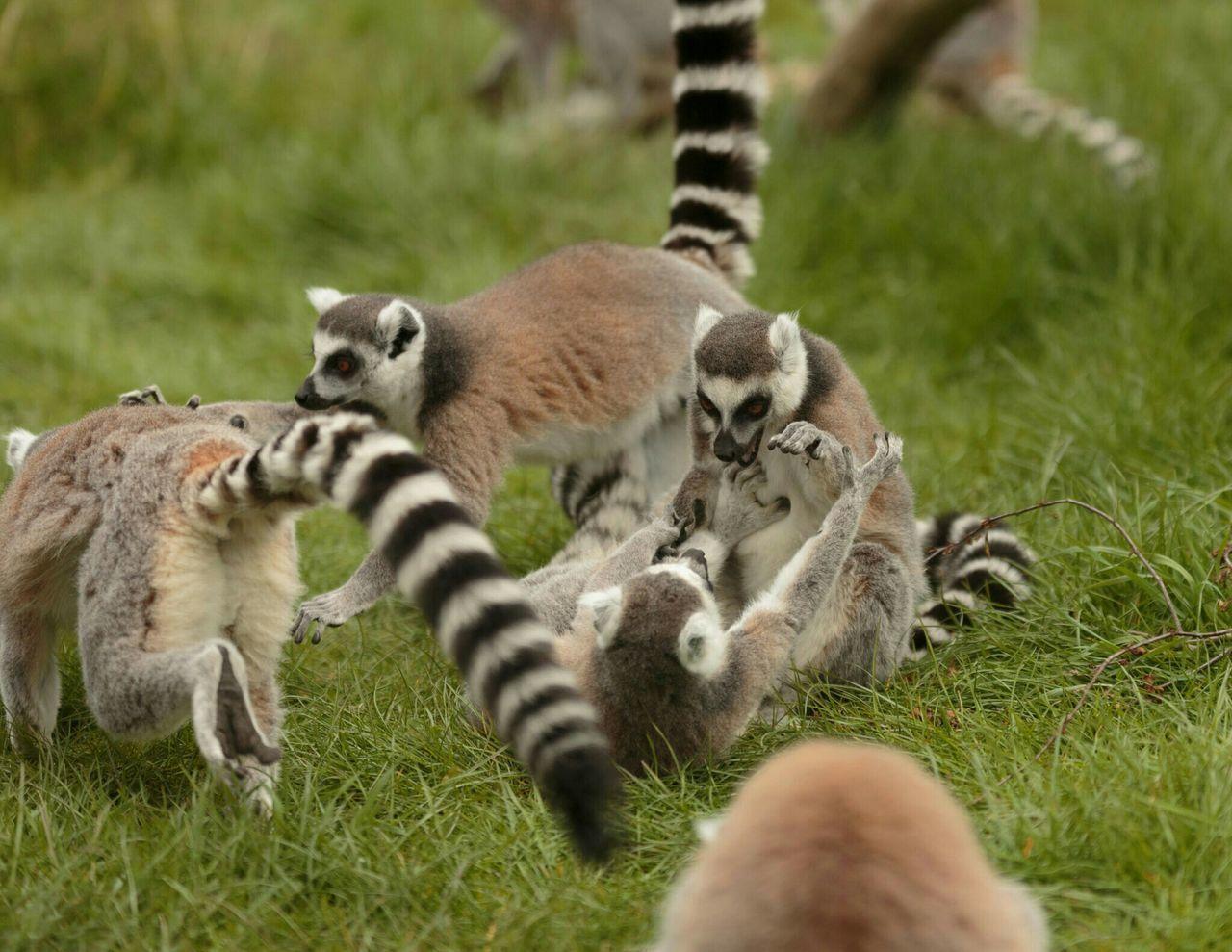 View Of Animals On Grassland